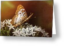 Anartia Jatrophae - White Peacock Butterfly  Greeting Card