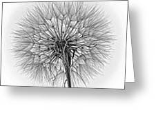 Anatomy Of A Weed Monochrome Greeting Card