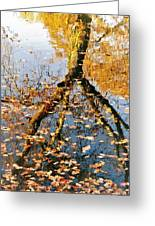 Anchorage In Autumn Greeting Card