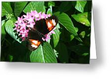 Anchored Down - Butterfly Greeting Card