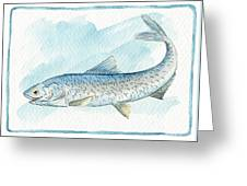 Anchovy Greeting Card