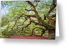 Ancient Angel Oak Tree  Greeting Card