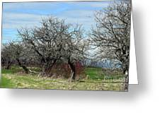 Ancient Apples Budding Out Greeting Card