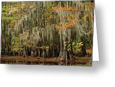Ancient Cypress Forest Greeting Card