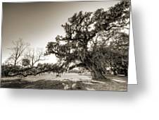 Ancient Live Oak Tree Greeting Card