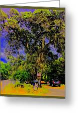 Ancient Oak At Rinconada De Los Gatos S Greeting Card