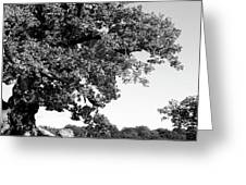 Ancient Oak, Bradgate Park Greeting Card