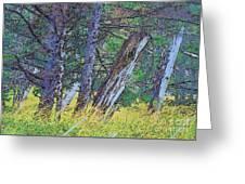 Ancient Totems Of Haida Gwai Greeting Card