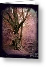 Ancient Tree By A Stream Greeting Card