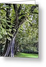 Ancient Tree Luxembourg Gardens Paris Greeting Card