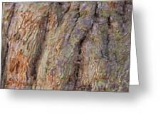 Ancient Tree Skin Greeting Card