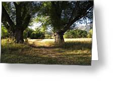 Ancient Willows #1 Greeting Card