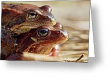 And Then I Found You. European Common Brown Frog Greeting Card