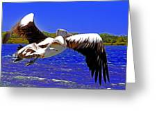 And The Seagull Follows Pelican Greeting Card