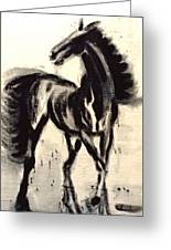 Andalusian Colt Greeting Card
