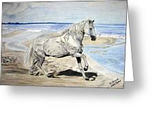Andalusian Horse Greeting Card