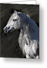 Andalusian Portrait Greeting Card