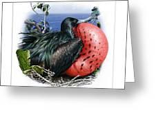 Andrews Frigatebird Fregata Andrewsi 3 Greeting Card
