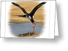 Andrews Frigatebird Fregata Andrewsi 4 Greeting Card