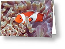 Anemone And Clown-fish Greeting Card