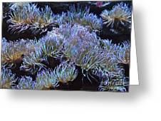 Anemone Greeting Card