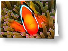 Anemone Fish Greeting Card