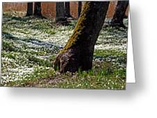 Anemone Forest Greeting Card