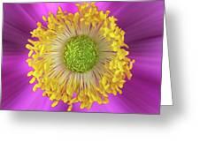 Anemone Hupehensis 'hadspen Greeting Card