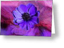 Anemone In Purple Greeting Card