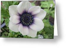 Anemone One Greeting Card