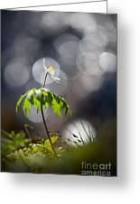 Anemone  Greeting Card by Rikard Strand