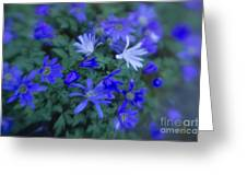 Anemones 1 Greeting Card