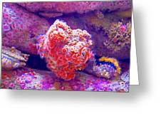 Anemones In Monterey Aquarium-california   Greeting Card