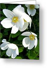 Anemones Greeting Card