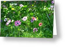 Anemonies Greeting Card