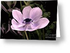 Anemore In Pink Greeting Card