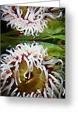 Anenome Reflection Greeting Card