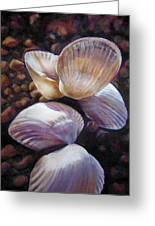 Ane's Shells Greeting Card