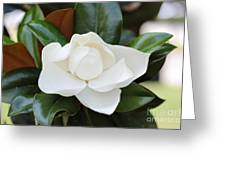 Angel In The Magnolia Greeting Card