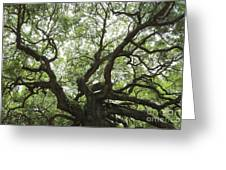 Angel Oak Branches Greeting Card