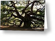 Angel Oak In November Greeting Card