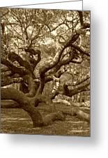 Angel Oak In Sepia Greeting Card