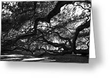 Angel Oak Limbs Bw Greeting Card