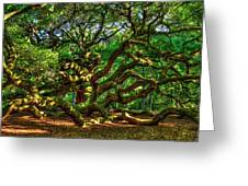 Angel Oak Morning Shadows Charleston South Carolina Greeting Card