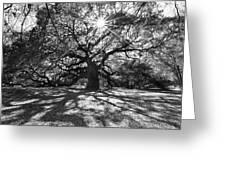 Angel Oak Starbusrt Greeting Card