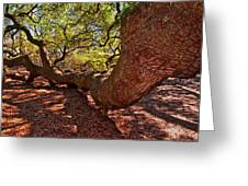 Angel Oak Tree 003 Greeting Card