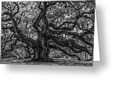 Angel Oak Tree Americana Greeting Card