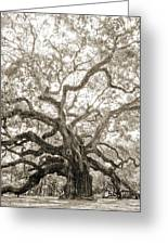 Angel Oak Tree Charleston Sc Greeting Card