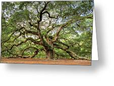 Angel Oak Tree Of Life Greeting Card