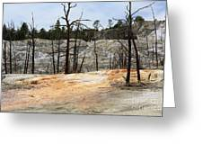 Angel Terrace At Mammoth Hot Springs Yellowstone National Park Greeting Card